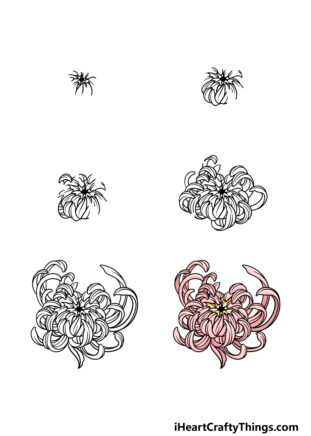 How To Draw A Chrysanthemum in 6 steps