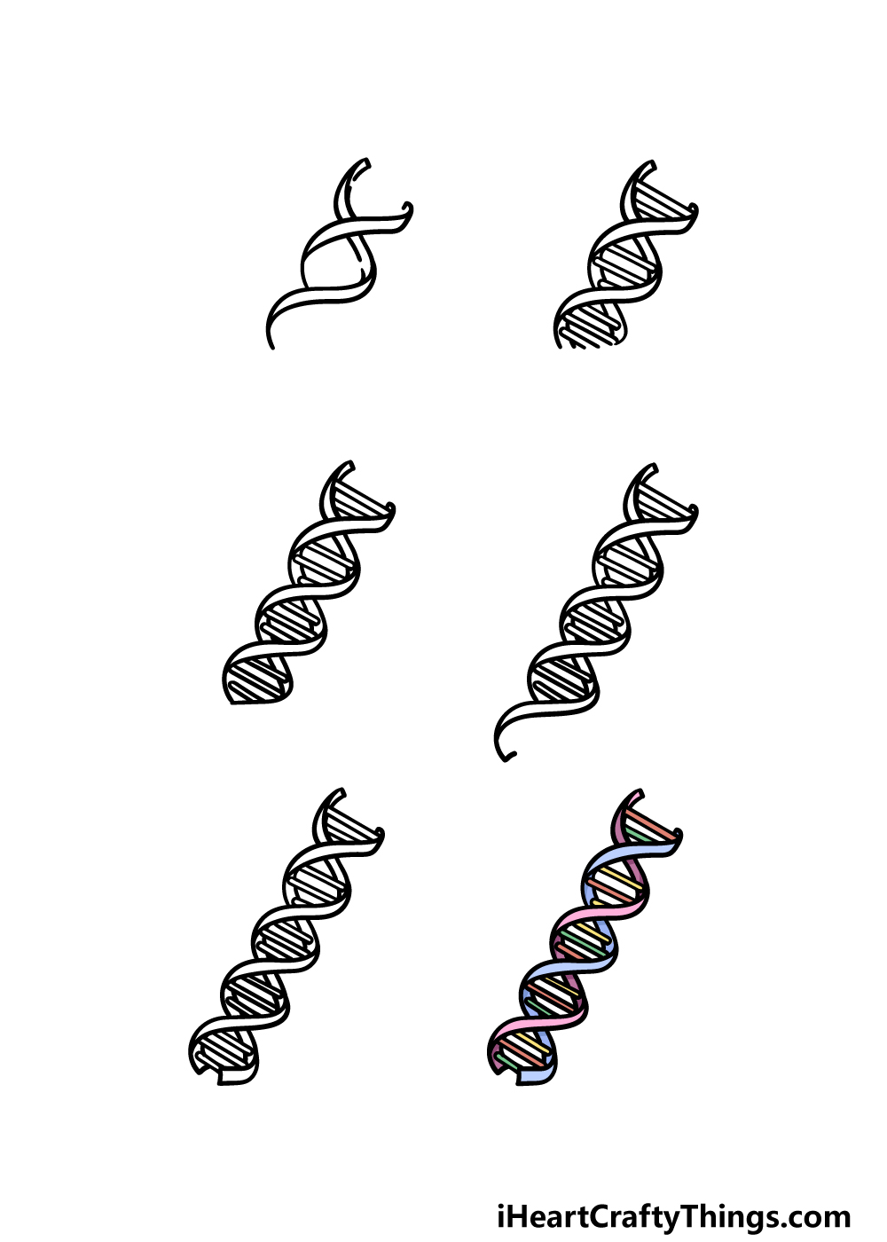how to draw DNA in 6 steps