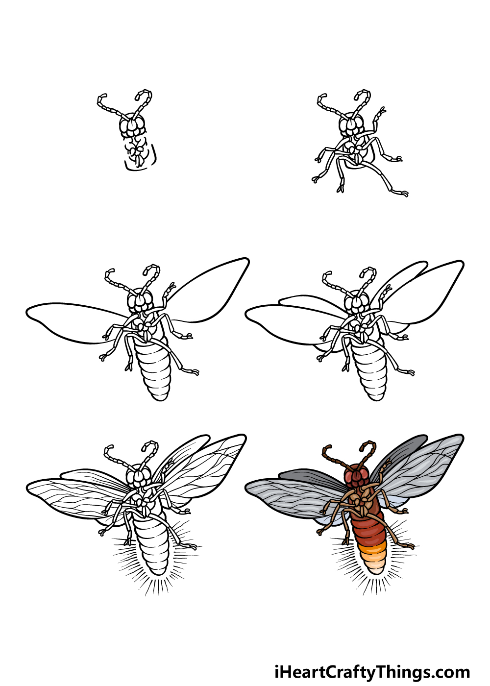 how to draw a firefly in 6 steps