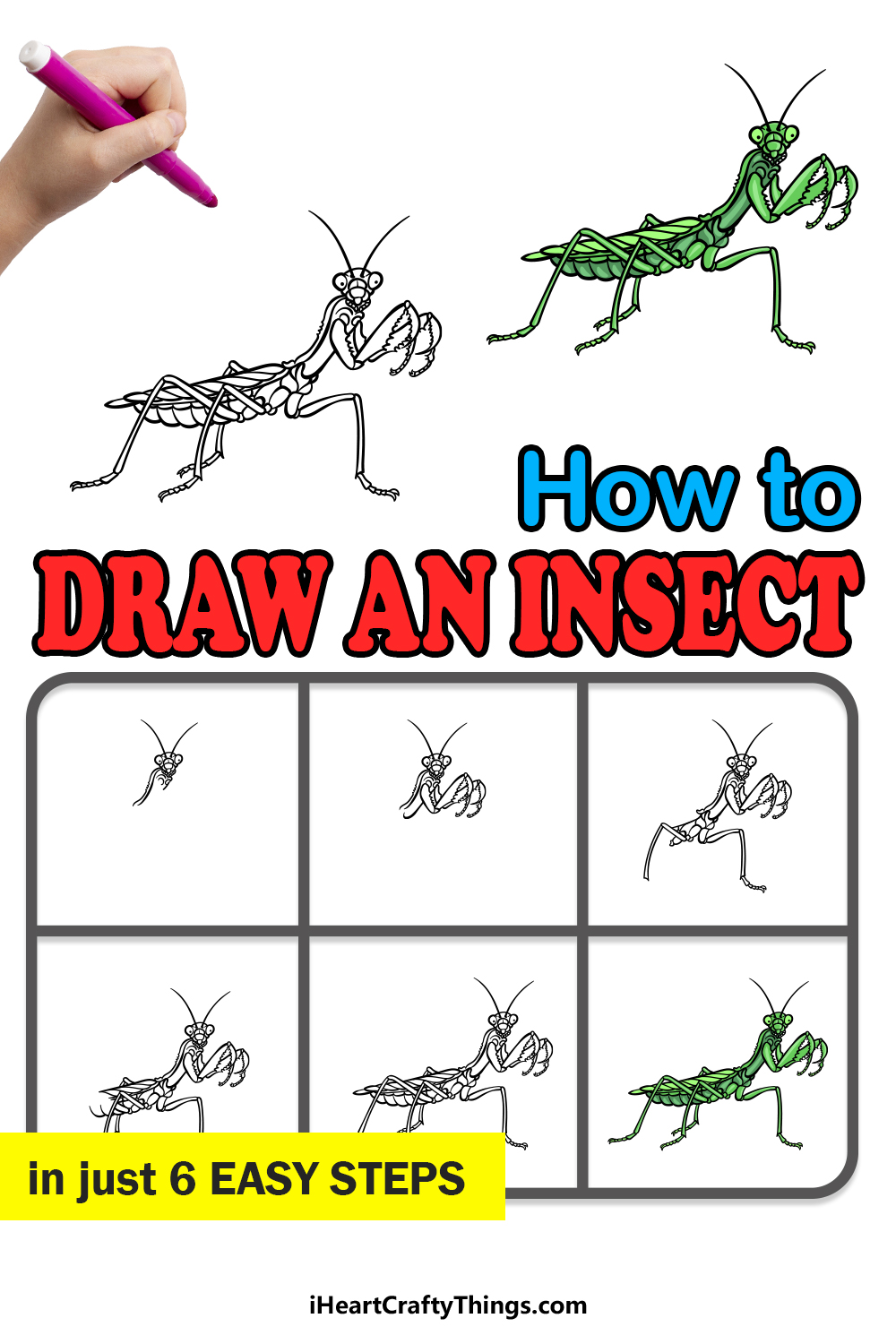 how to draw an insect in 6 easy steps