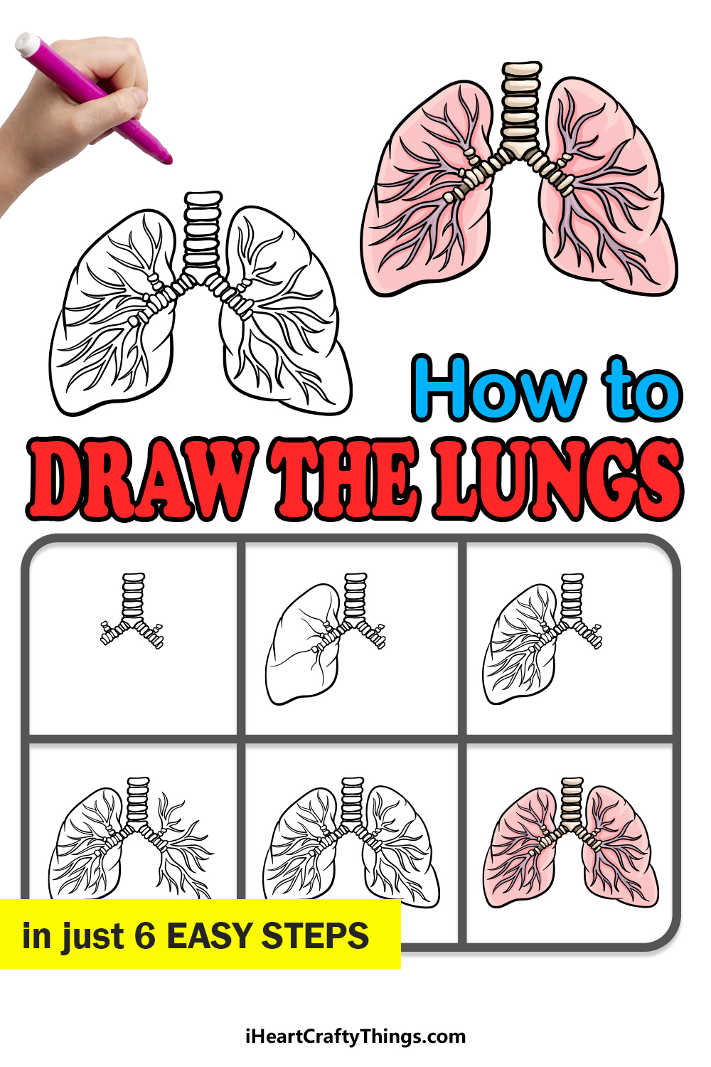 how to draw the lungs in 6 easy steps