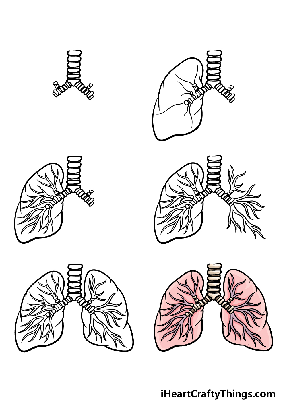 how to draw lungs in 6 steps
