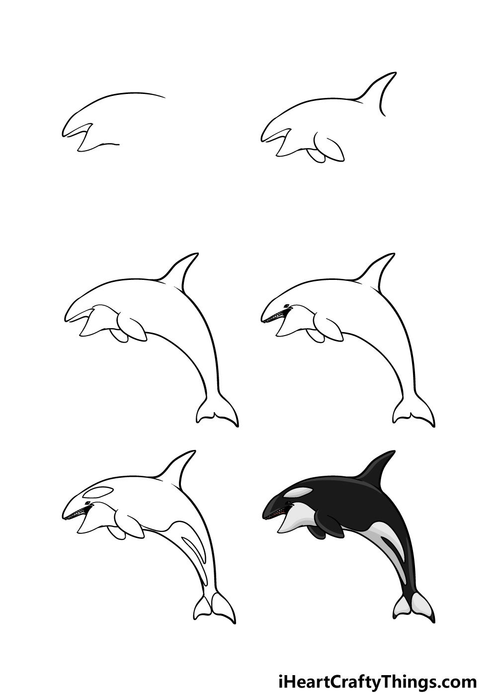 how to draw an Orca in 6 steps