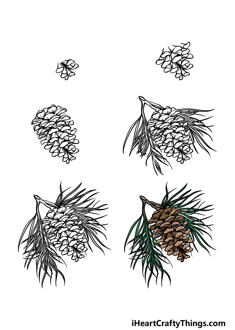 how to draw a pine cone in 6 steps