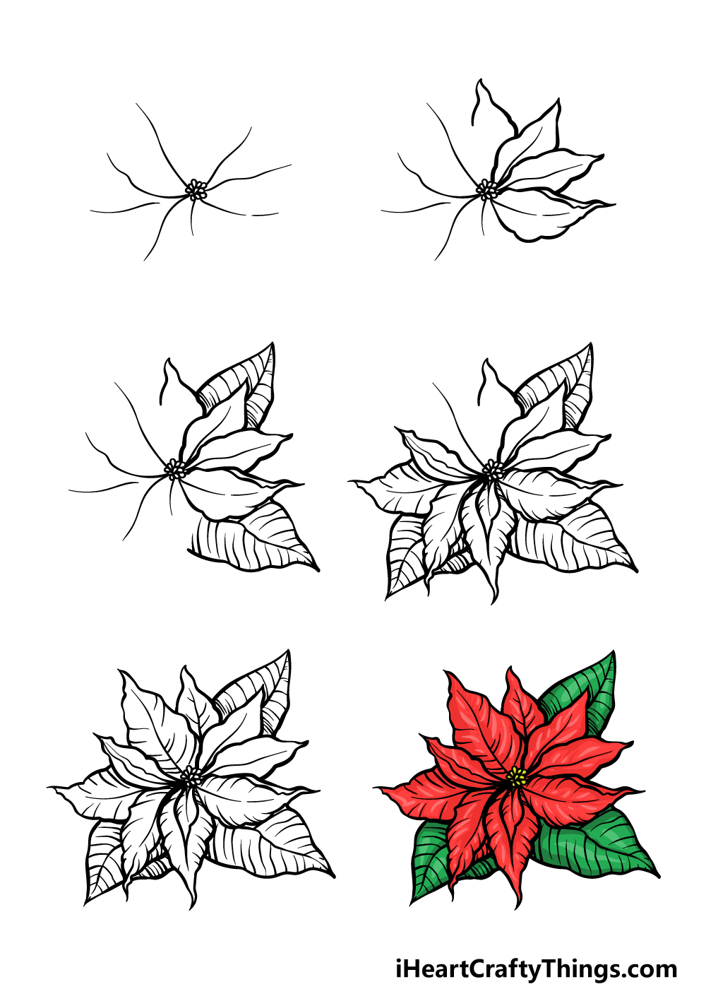 how to draw a poinsettia in 6 steps
