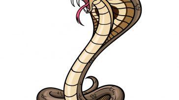 how to draw a cobra image