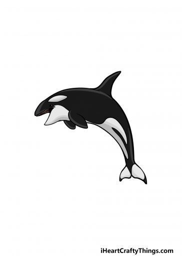 how to draw an orca image