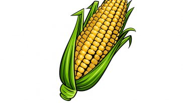 how to draw a corn image