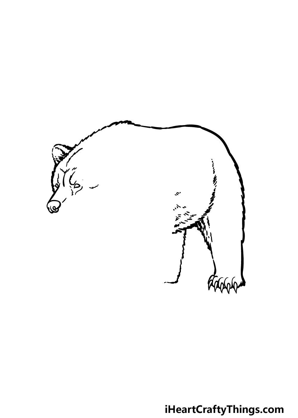 how to draw a grizzly bear step 2