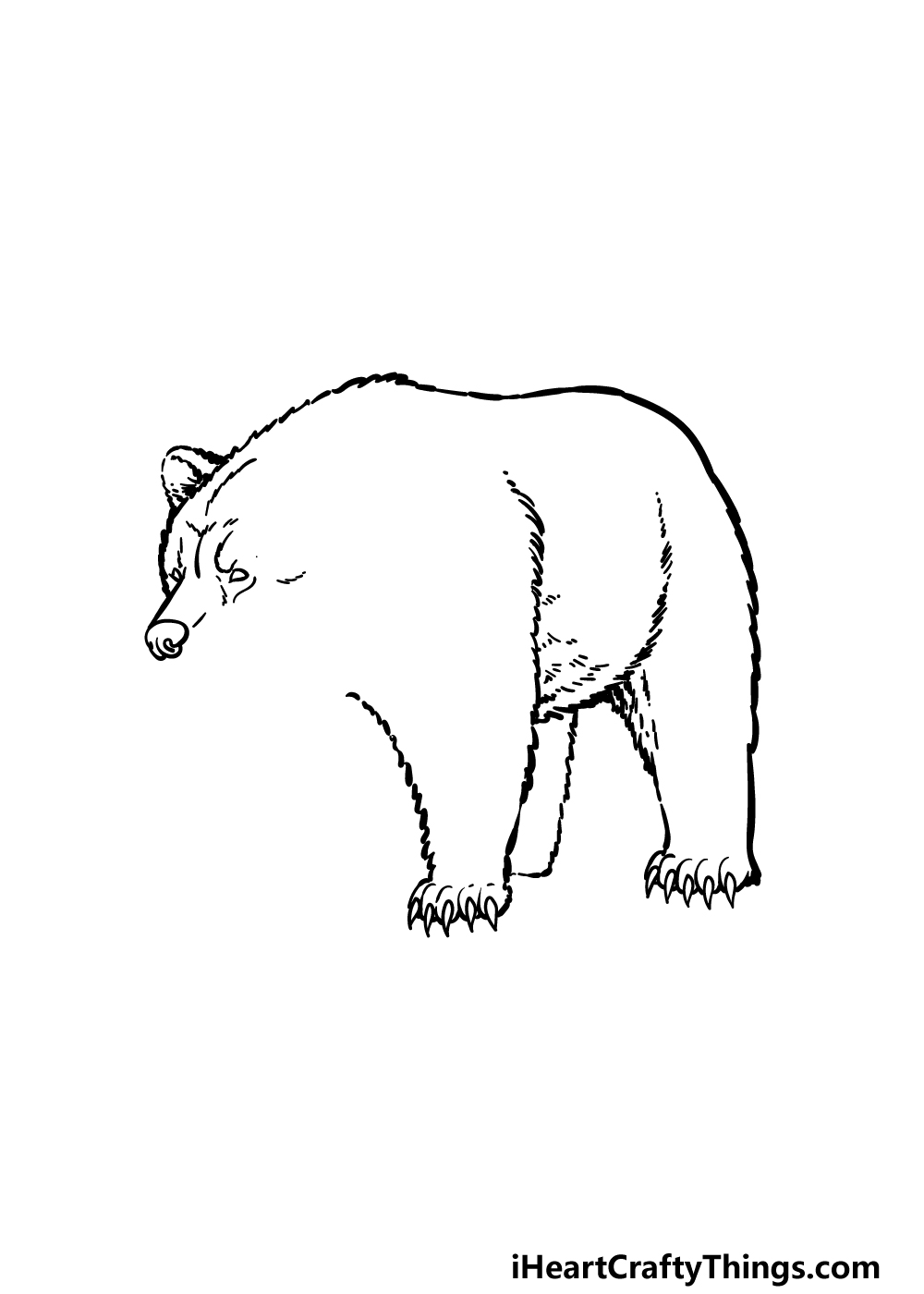how to draw a grizzly bear step 3
