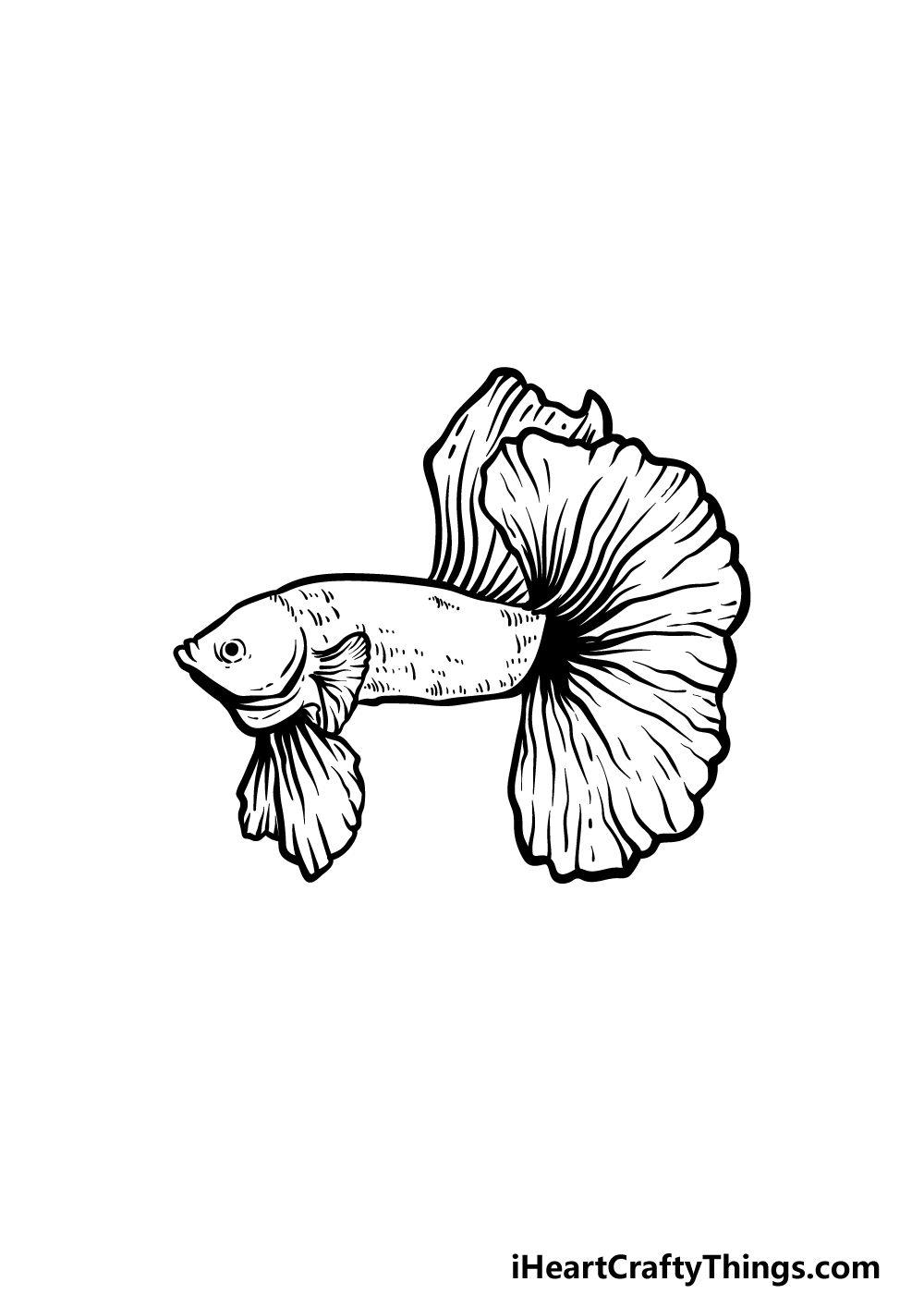 how to draw a Betta Fish step 3