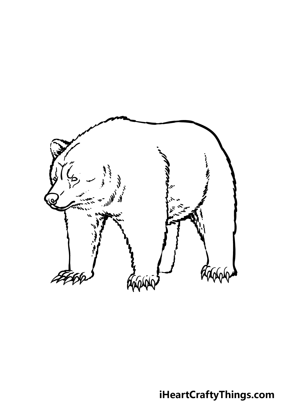 how to draw a grizzly bear step 4