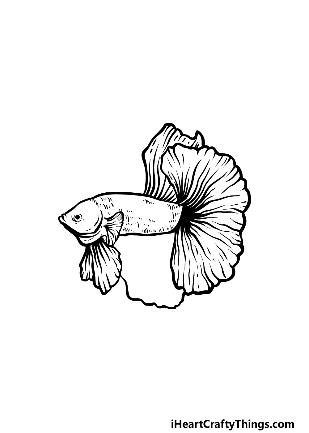 how to draw a Betta Fish step 4