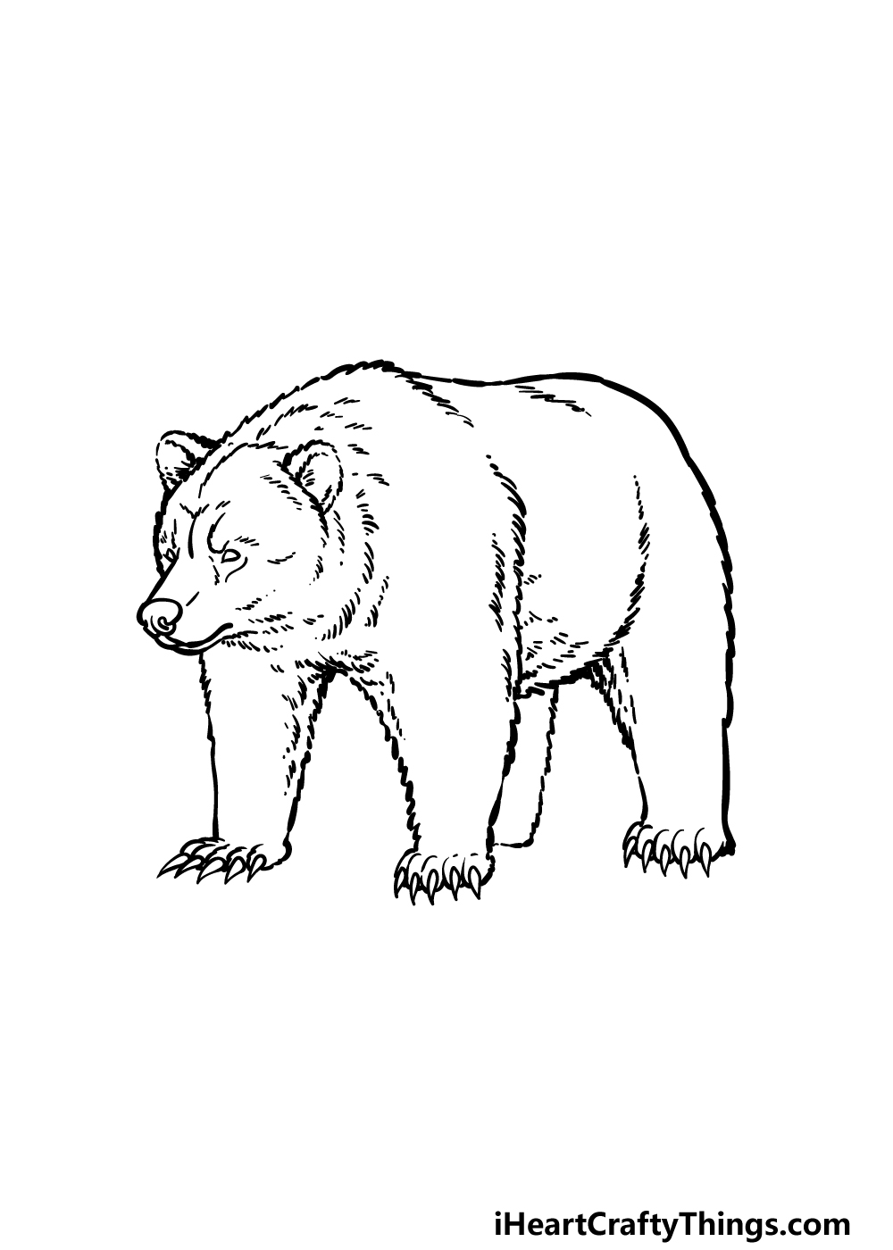 how to draw a grizzly bear step 5