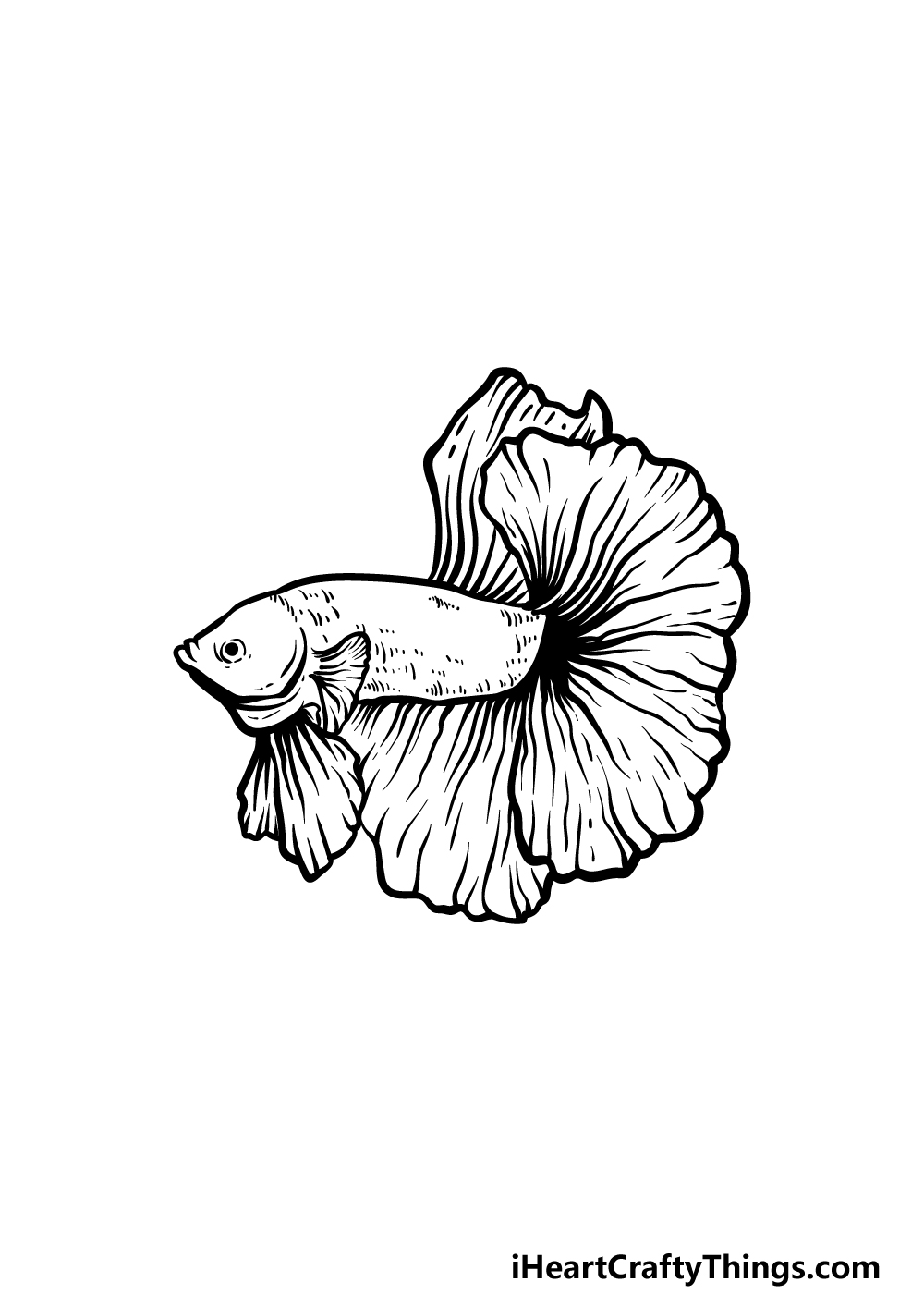 how to draw a Betta Fish step 5