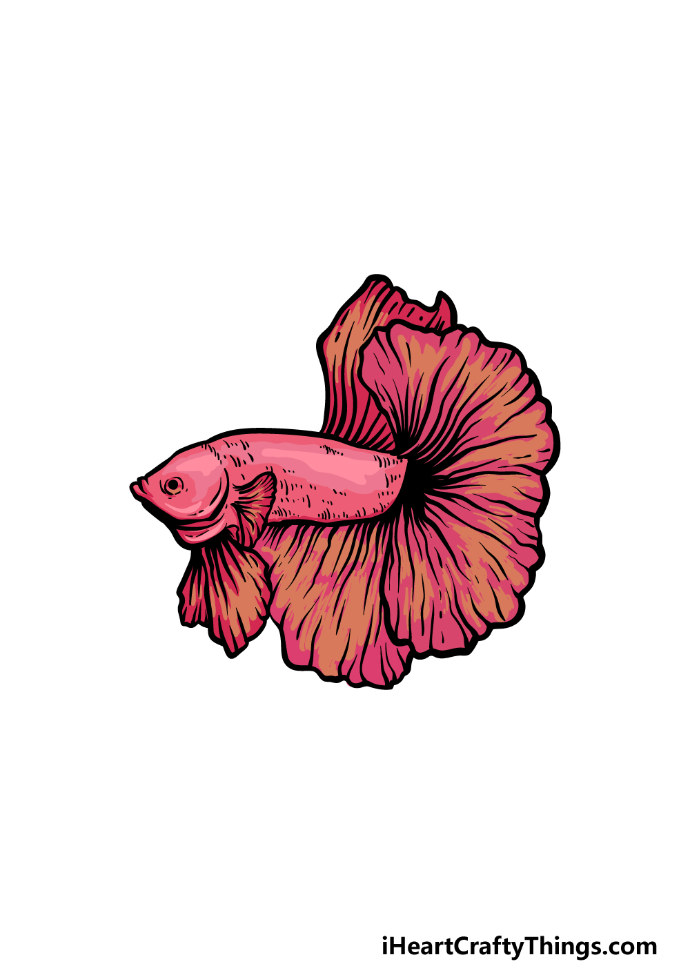 how to draw a Betta Fish step 6