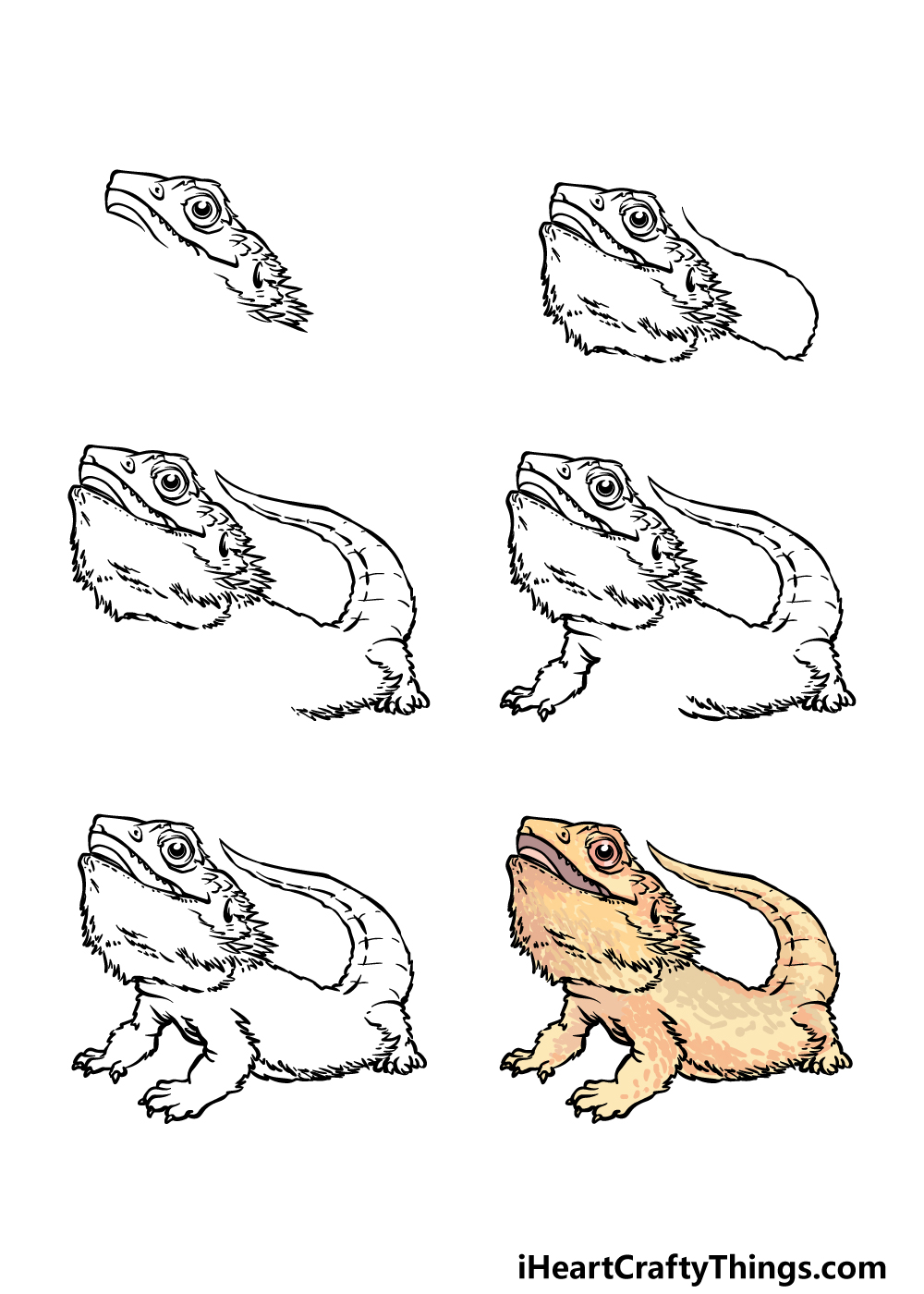 how to draw a bearded dragon in 6 steps