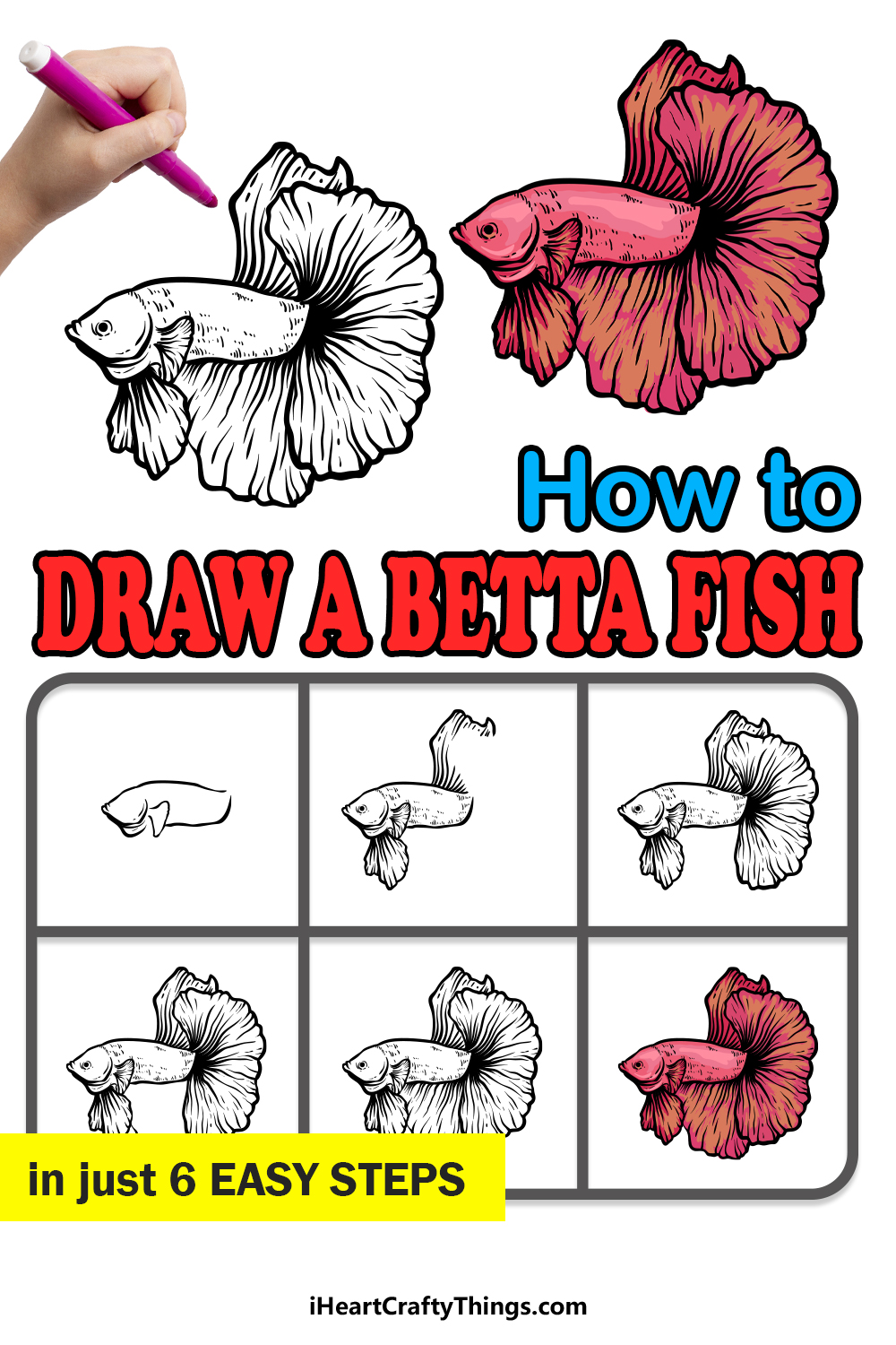 how to draw a Betta Fish in 6 easy steps