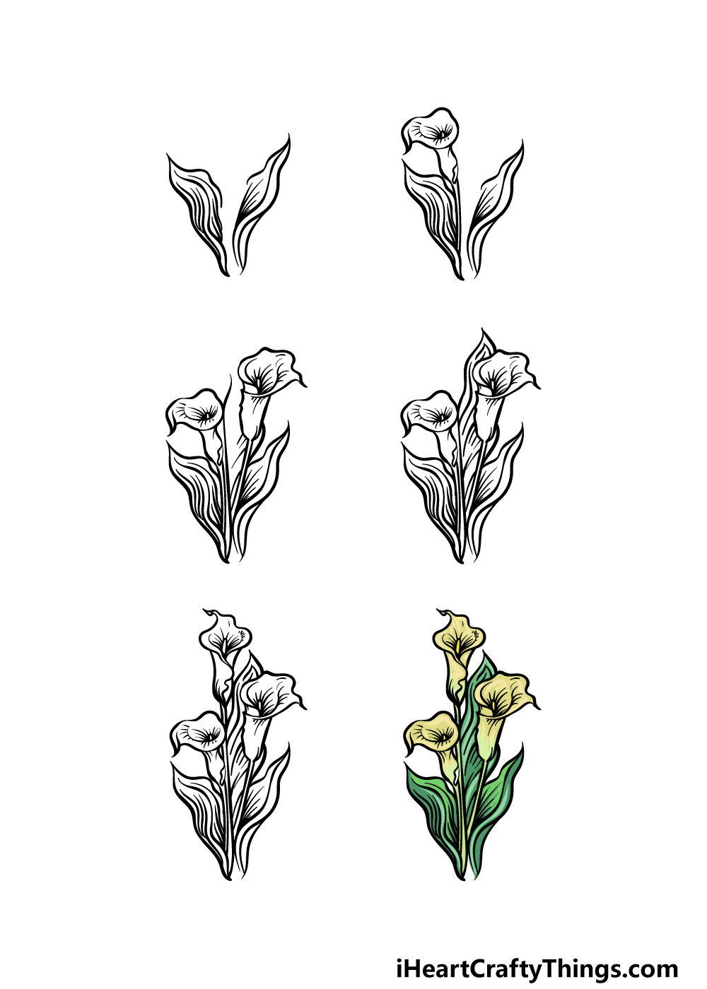 how to draw a Calla Lily in 6 steps
