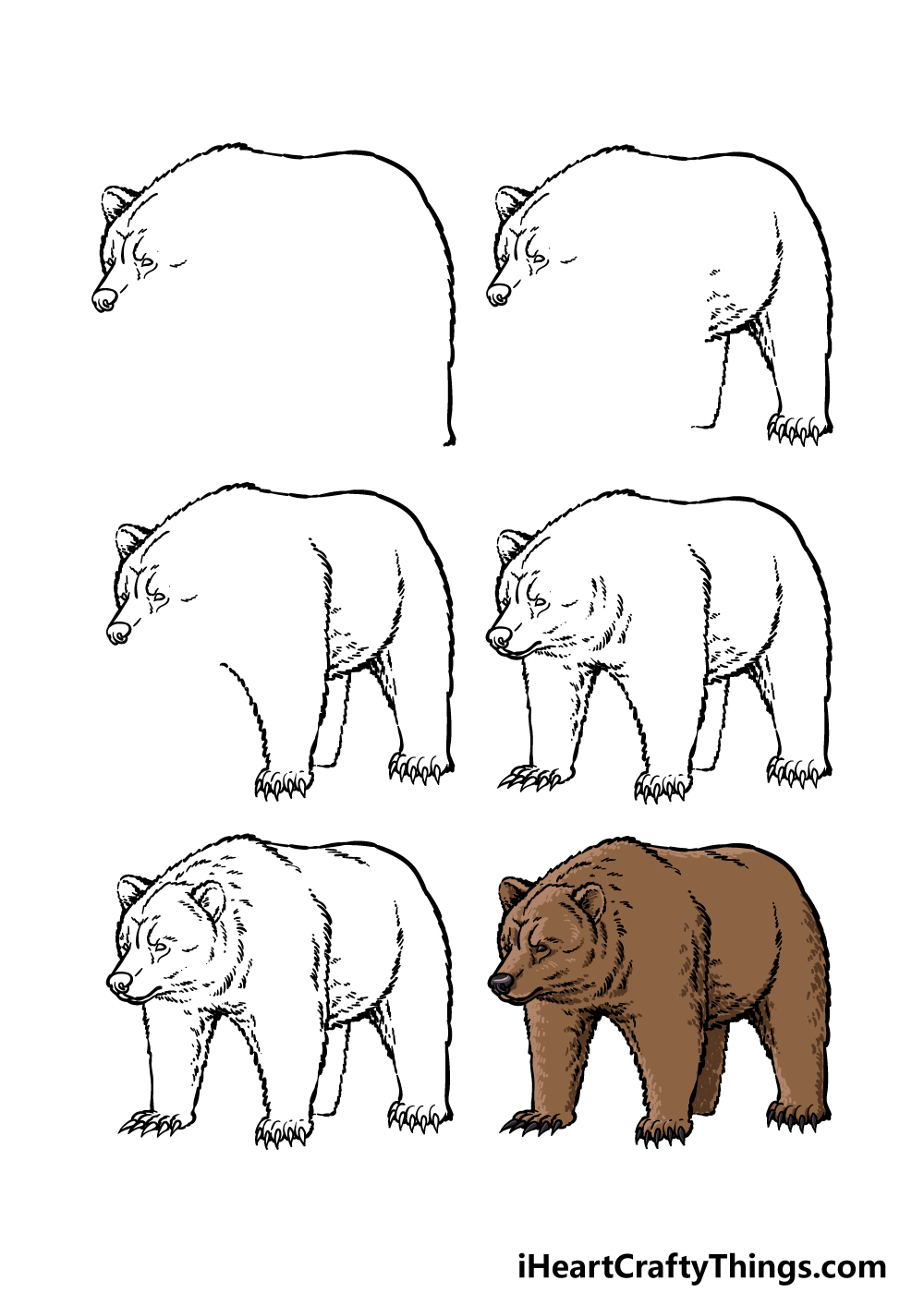 how to draw a grizzly bear  in 6 steps