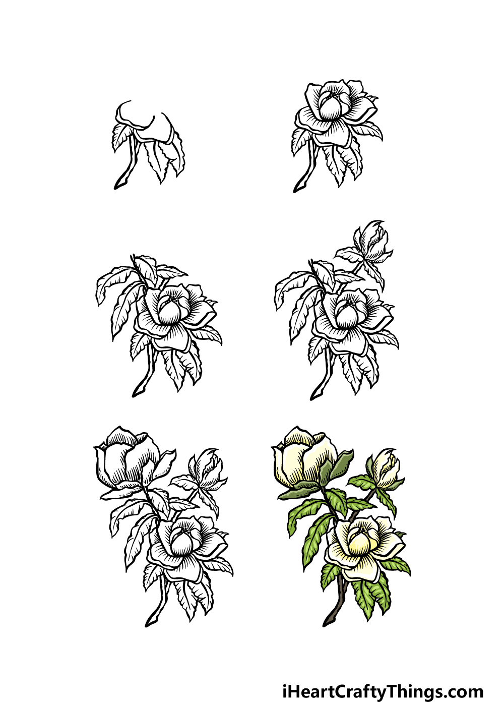 how to draw magnolia flower in 6  steps