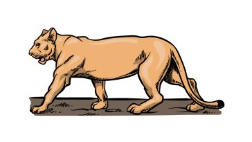 how to draw a Lioness image