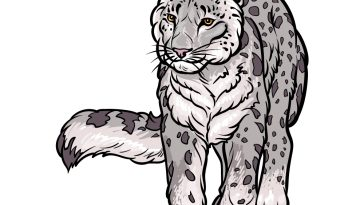 how to draw a snow leopard image