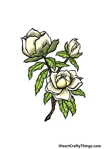 how to draw magnolia flower image