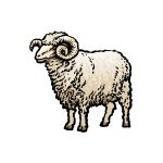 how to draw a ram image