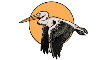 how to draw a pelican image
