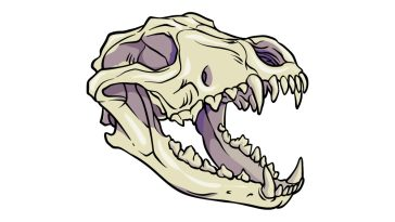how to draw a Wolf Skull image