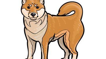 how to draw a Shiba Inu image