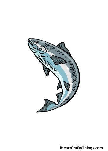 how to draw a Salmon image