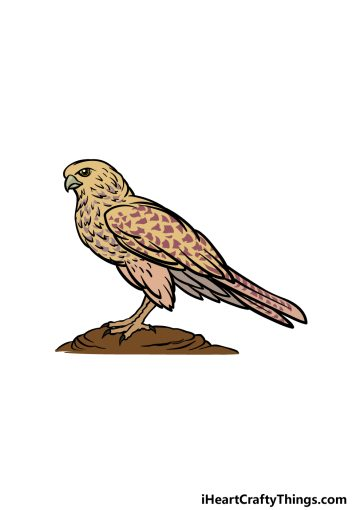 how to draw a Falcon image