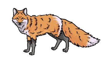 how to draw a red fox image